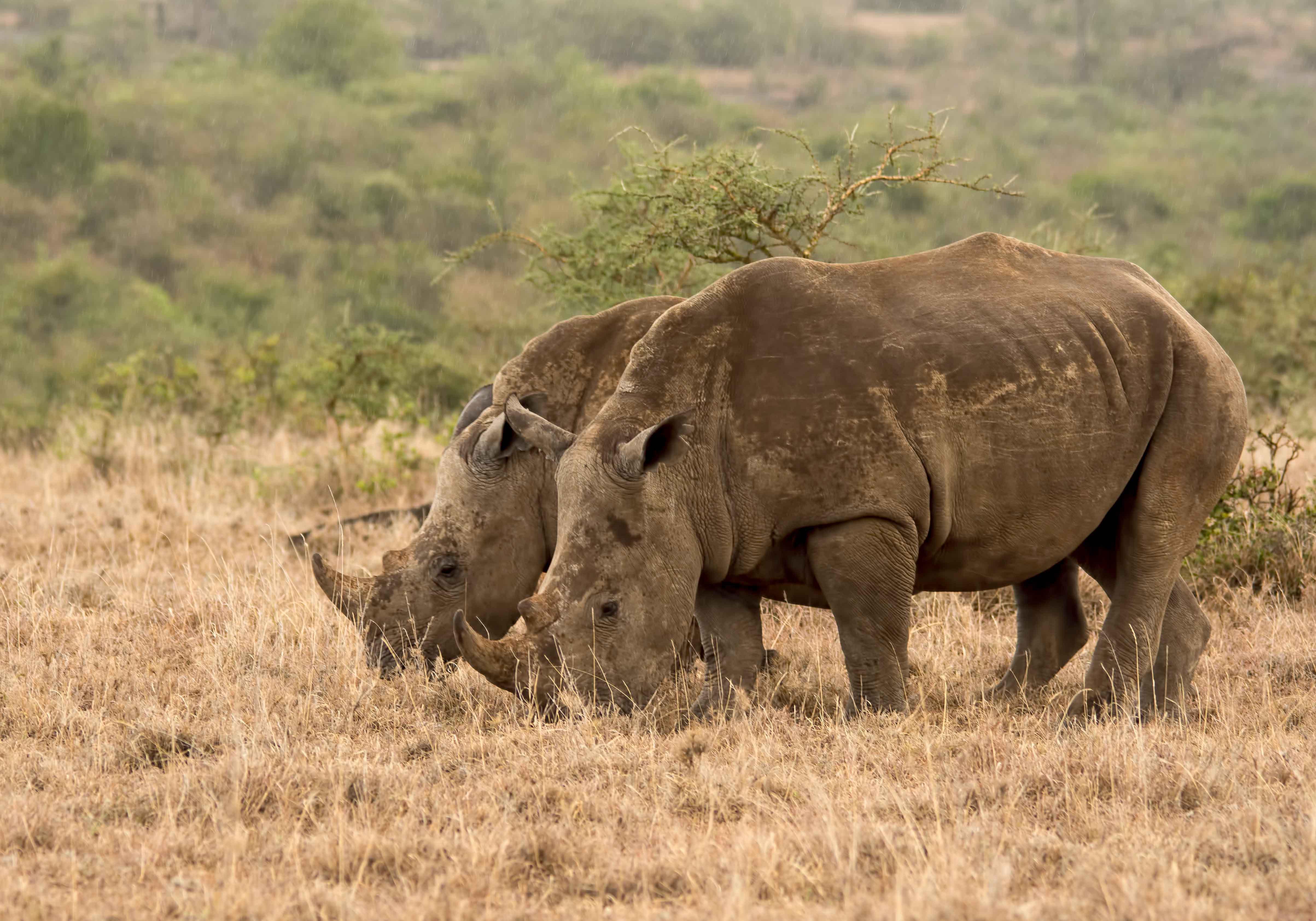 Nairobi-wilderness next door/