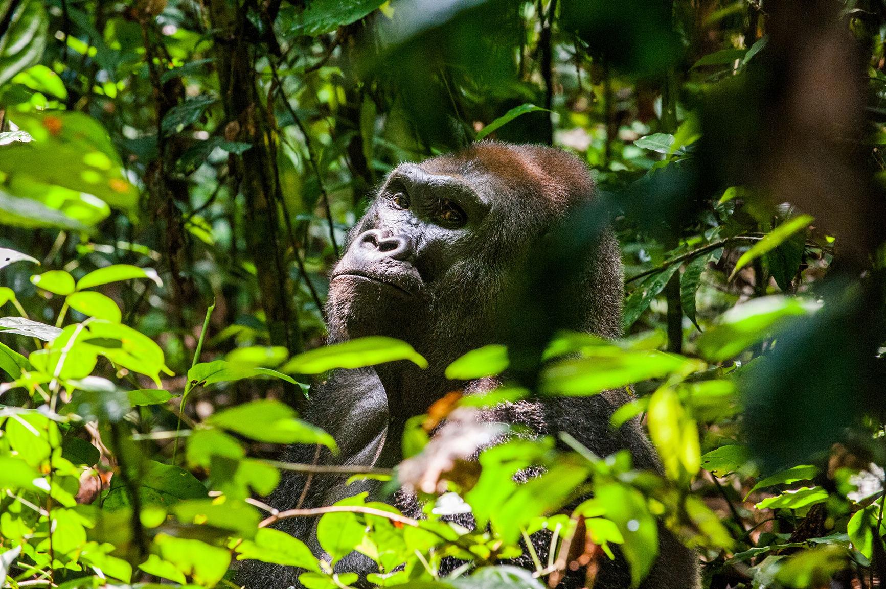 Congo is not like Congo/