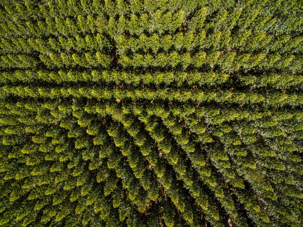 filipefrazao | istockphoto.com