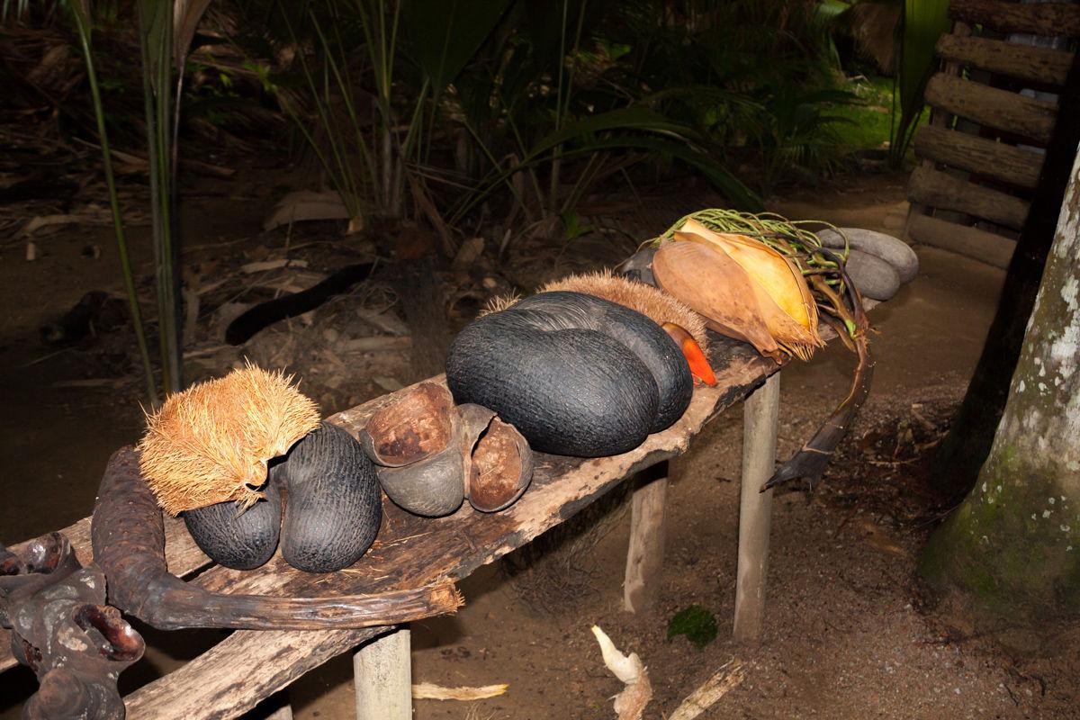 Coco De Mer Nut  symbol Seychel, Praslin, Vallee De Mai