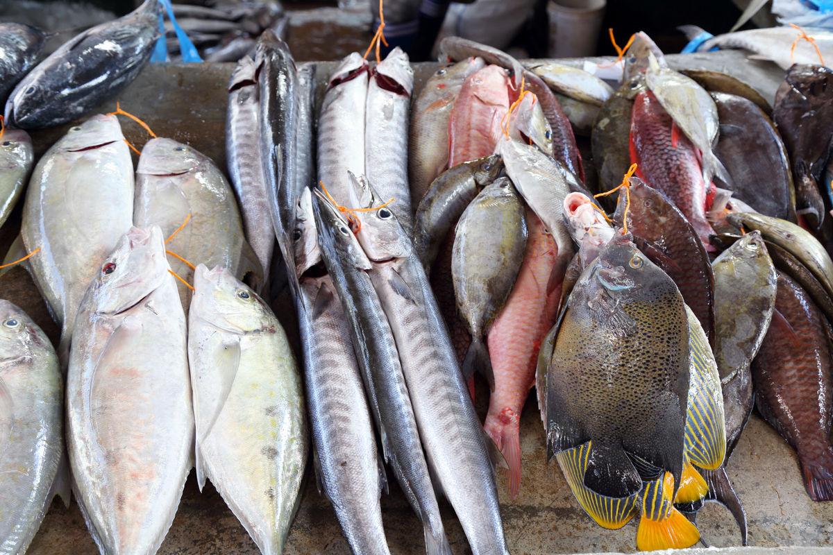 Různé ryby na rybím trhu ve Victoria City, ostrov Mahe, Seychely