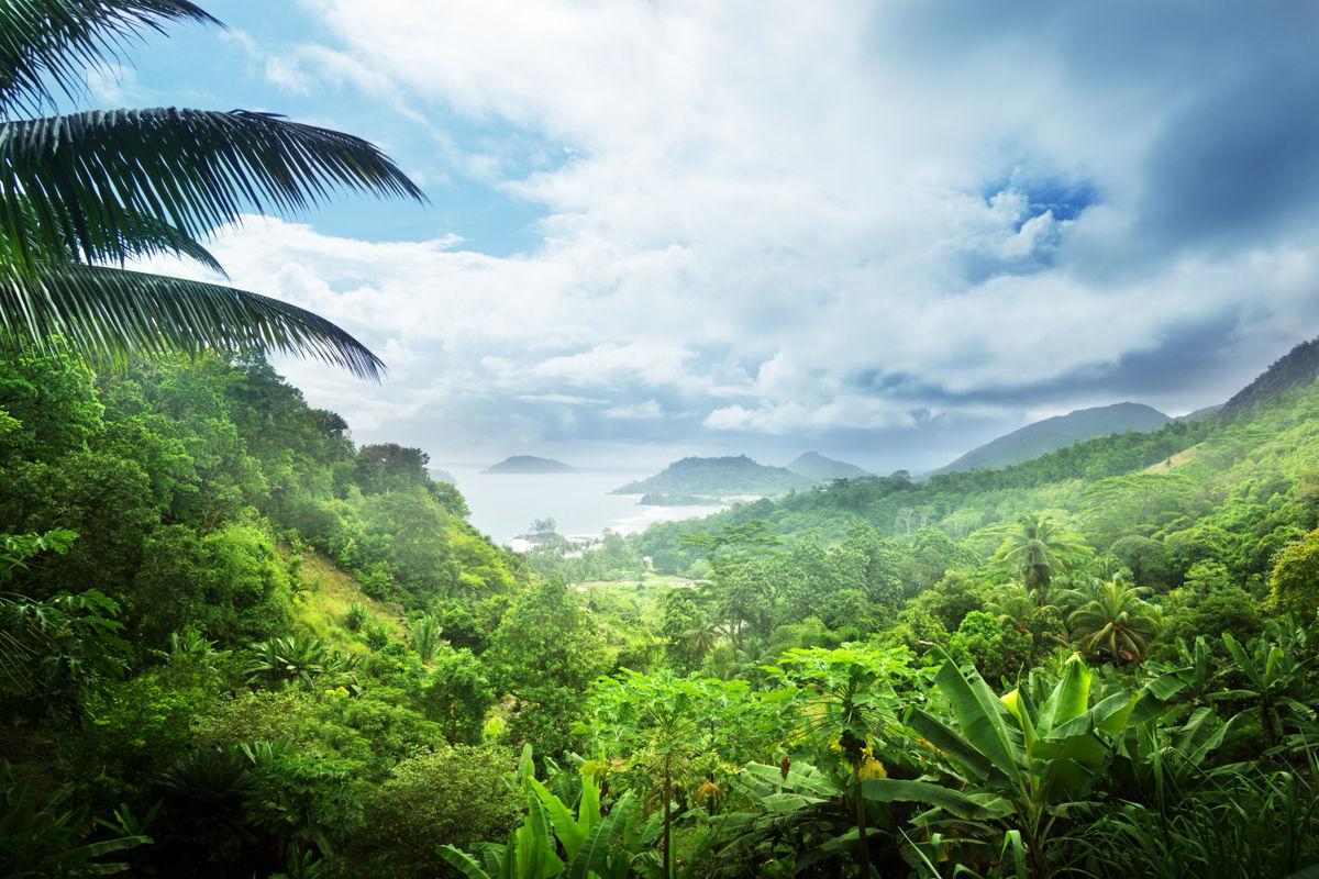 Džungle seychelského ostrova