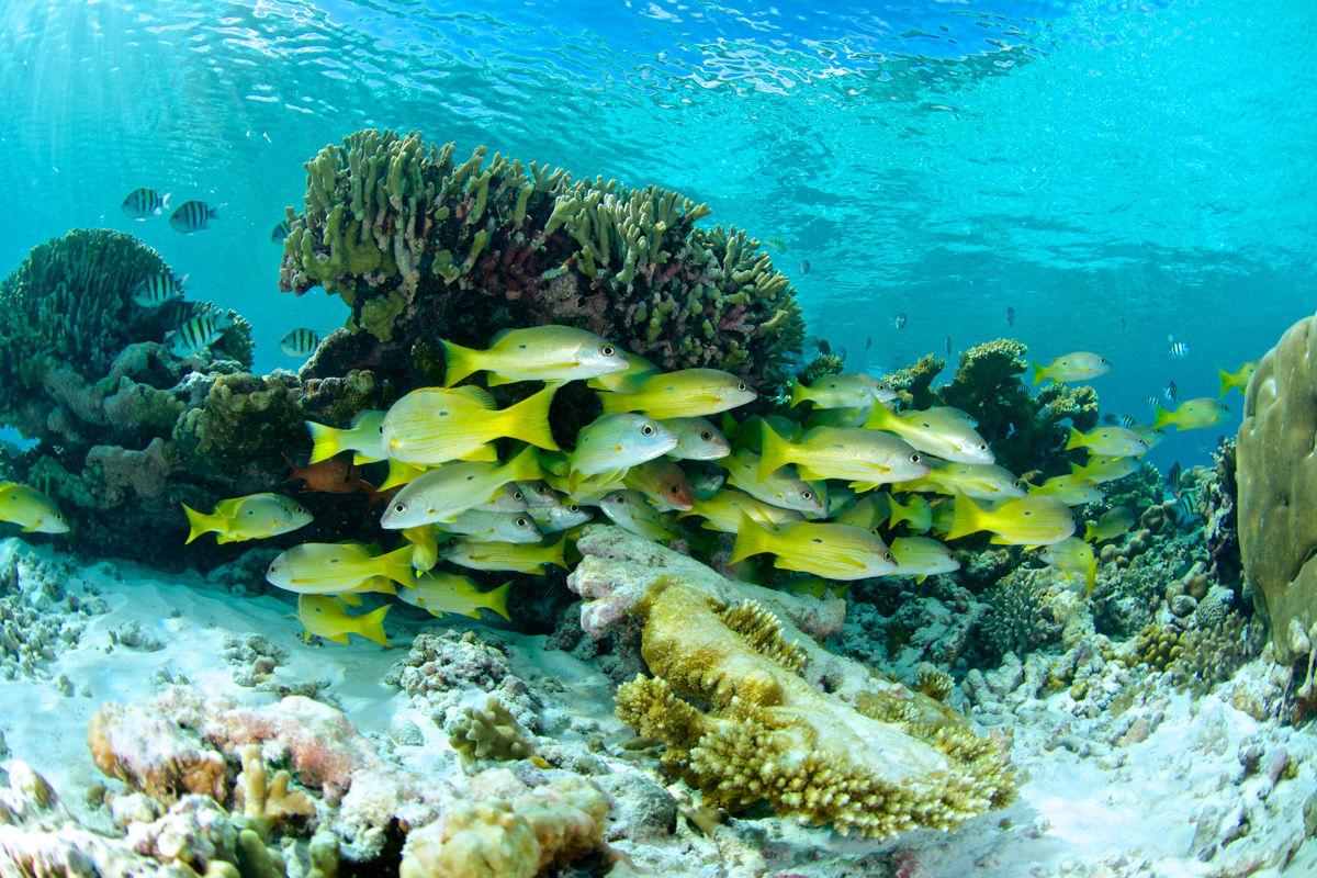 Hejno ryb poblíž odlomeného korálového útesu