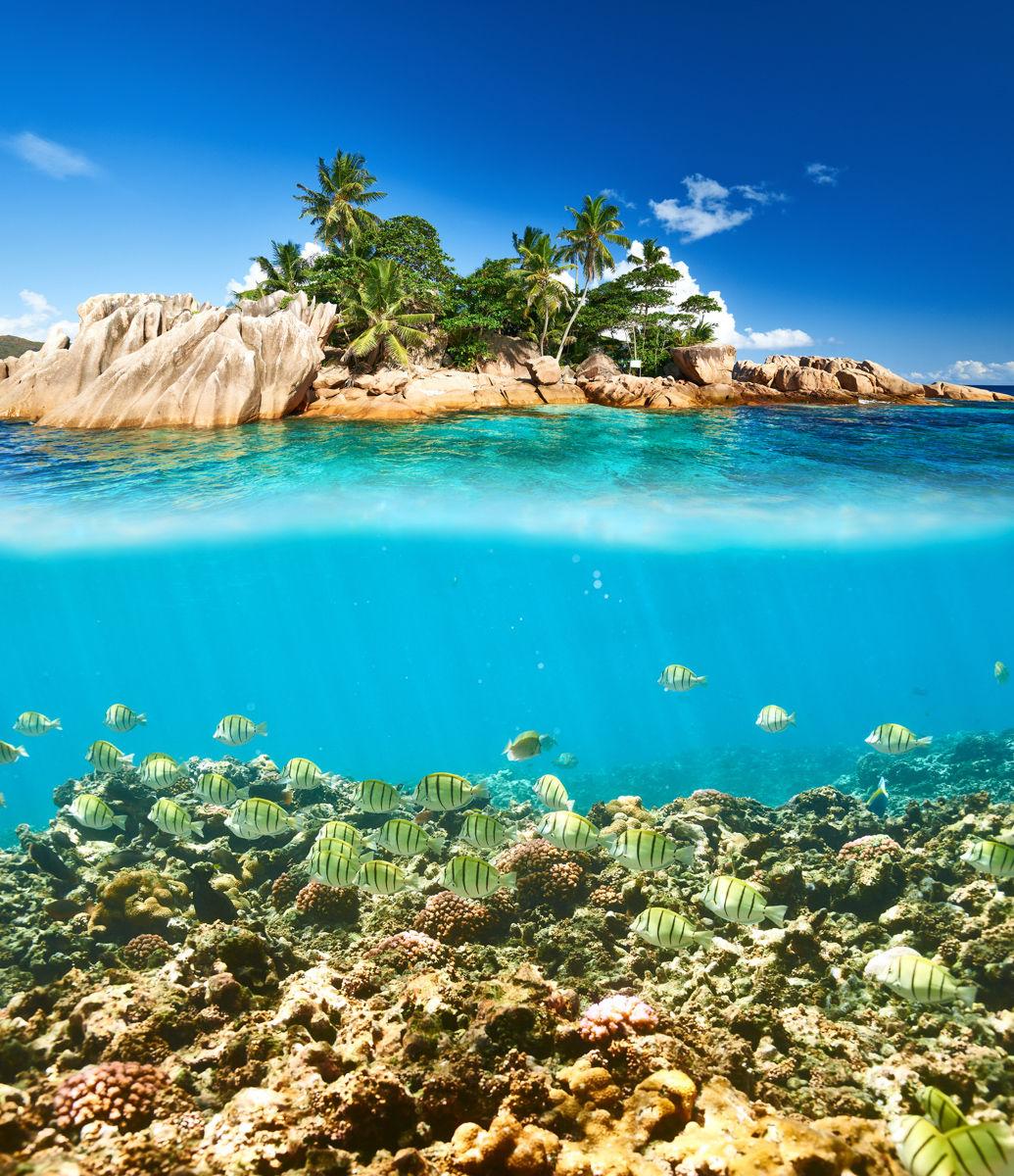 Korálový útes a ryby na Seychelách