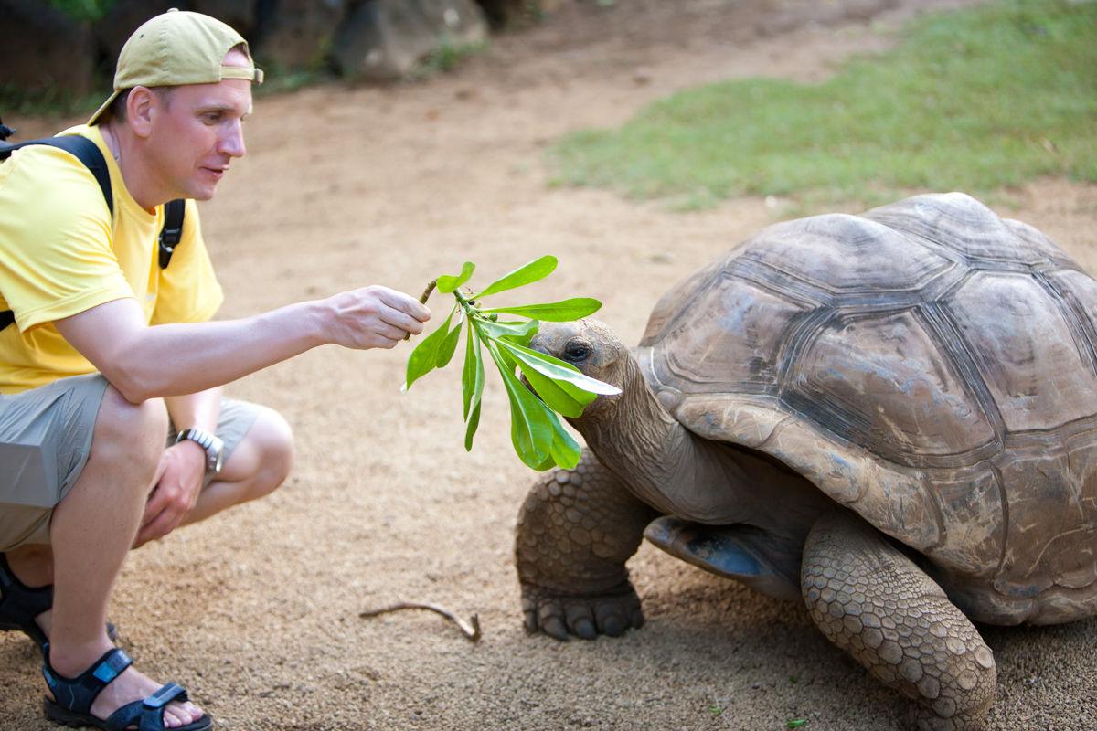 Muž, turista krmí želvu
