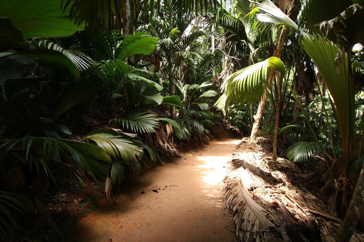 Vallée de Mai Nature Reserve je přírodní park na ostrově Praslin, Seychely. Jedná se o nejmenší přírodní památku světového dědictví UNESCO. Park je typický svými kokosovými palmami coco-de-mer. Strom coco-de-mer je největší dvojitý ořech na světě.