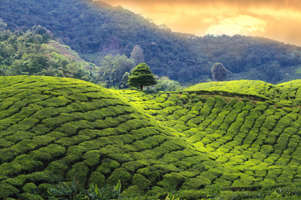 10 důvodů pro návštěvu Srí Lanky/